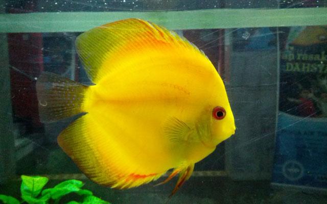 Ikan Ikan Ikan